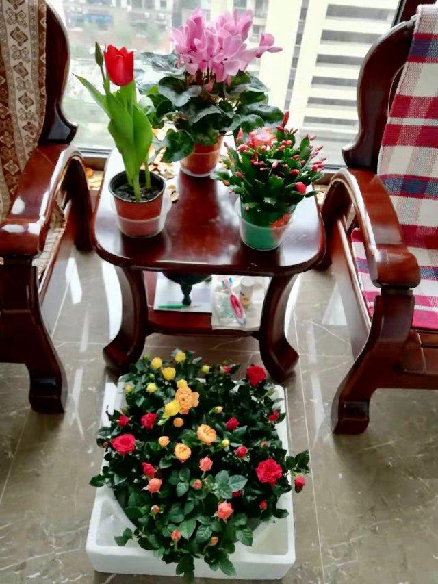 晒晒妈妈在国内剁手的四盆鲜花💐。