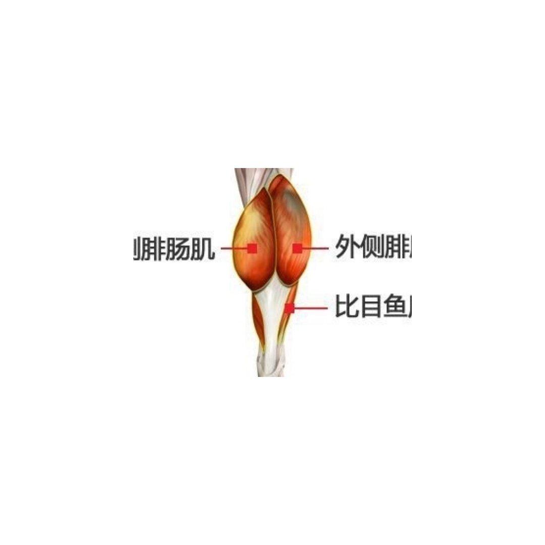 🐰|神经阻断瘦小腿(显微瘦小腿)...