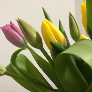 Lidl鲜花