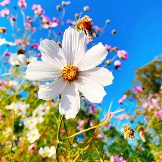 又是一年春,来晒晒你的居家植物!...