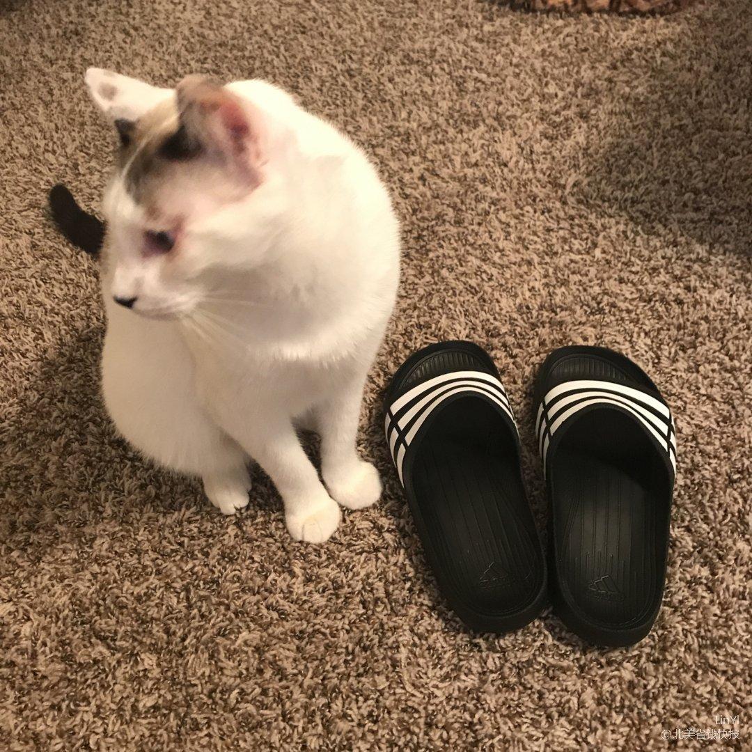 唯一一双不夹指的拖鞋