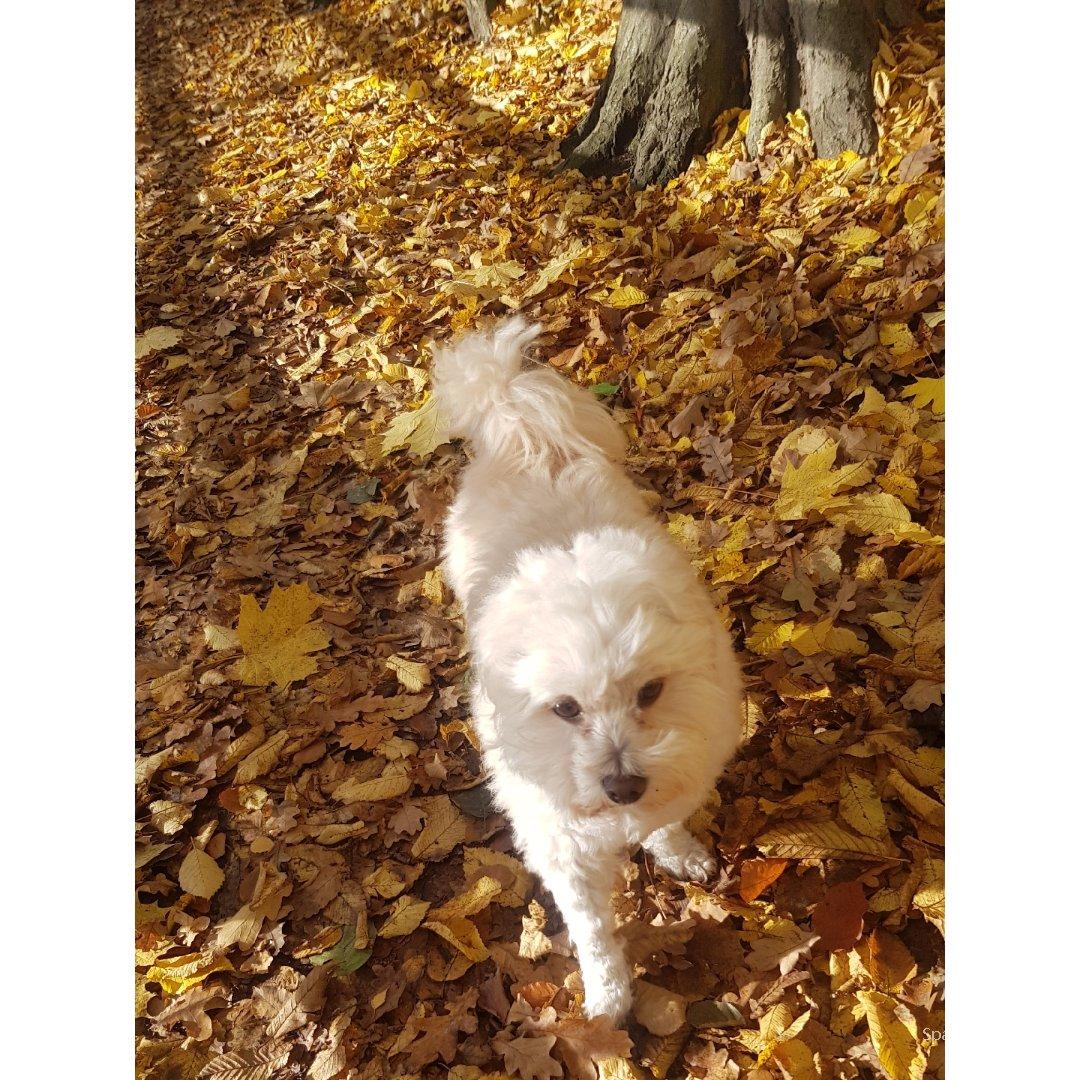 Hiking Day 🐕🍁 秋天的森林公...