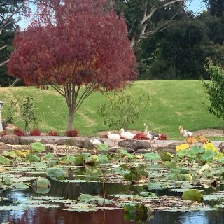 去什么Blue Lotus Garden...