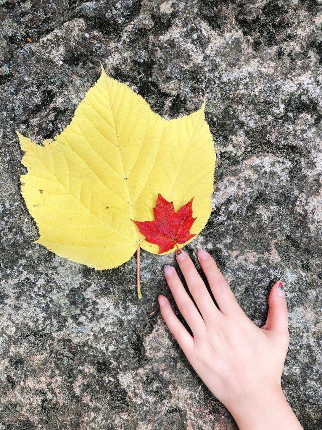 天凉好个秋