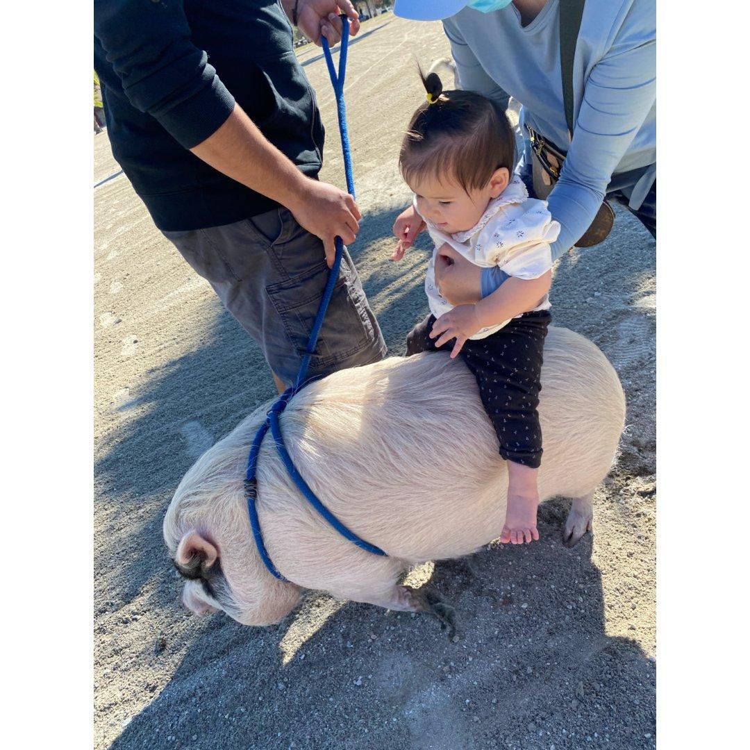 遛娃|🐖骑猪的那种哦~...