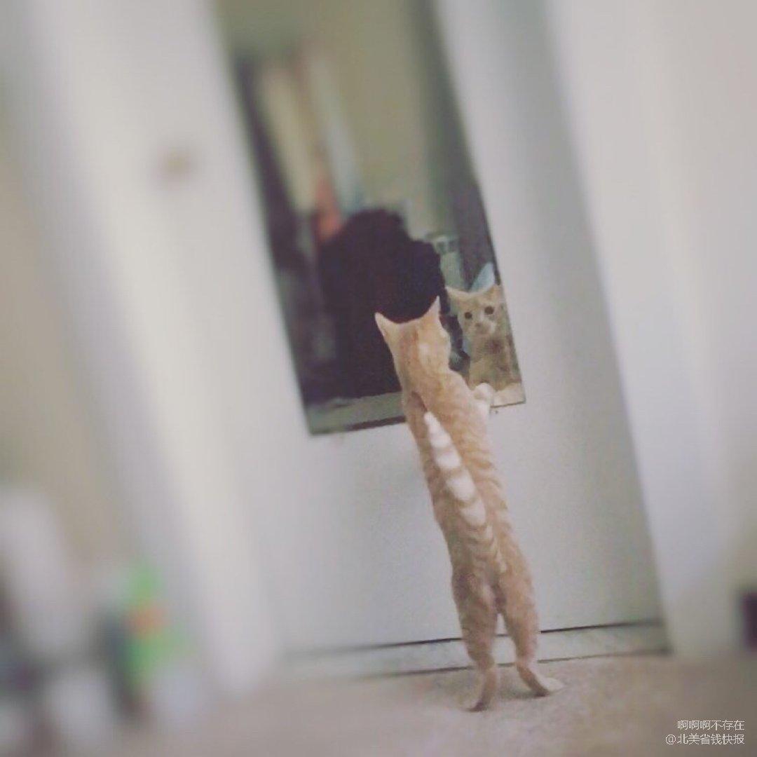 一只照镜子的猫