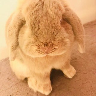 兔兔礼包-我的第一次众测