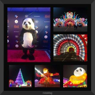 冬日浪漫 💕 Hello Panda Festival