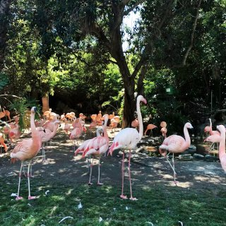 洛杉矶动物园|阳光之下,万物皆有灵...