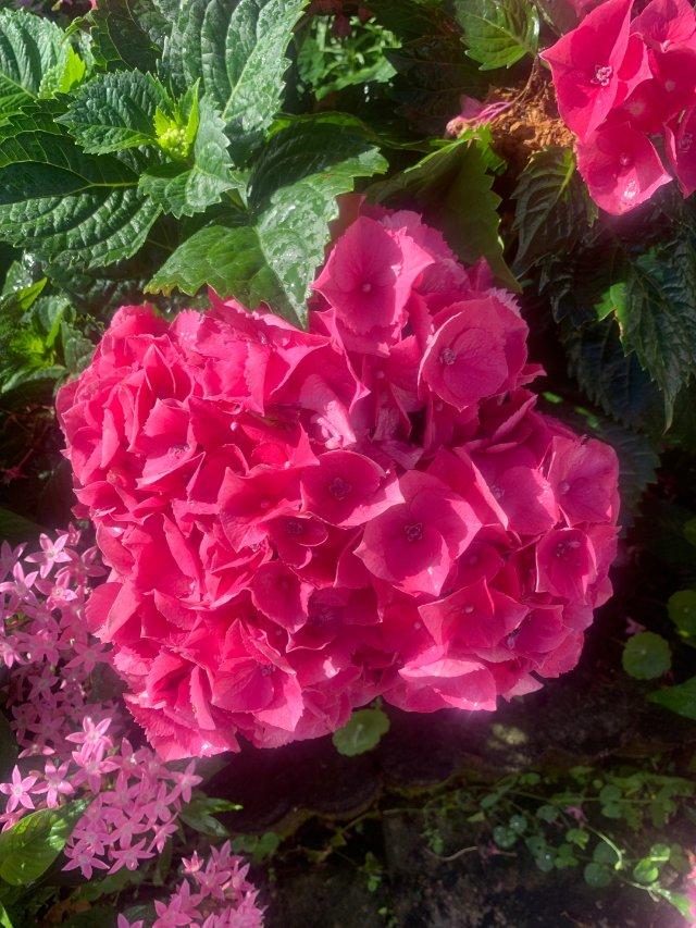 粉色之🌸🌸🌸🌸一朵朵