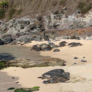 茂宜岛看海龟