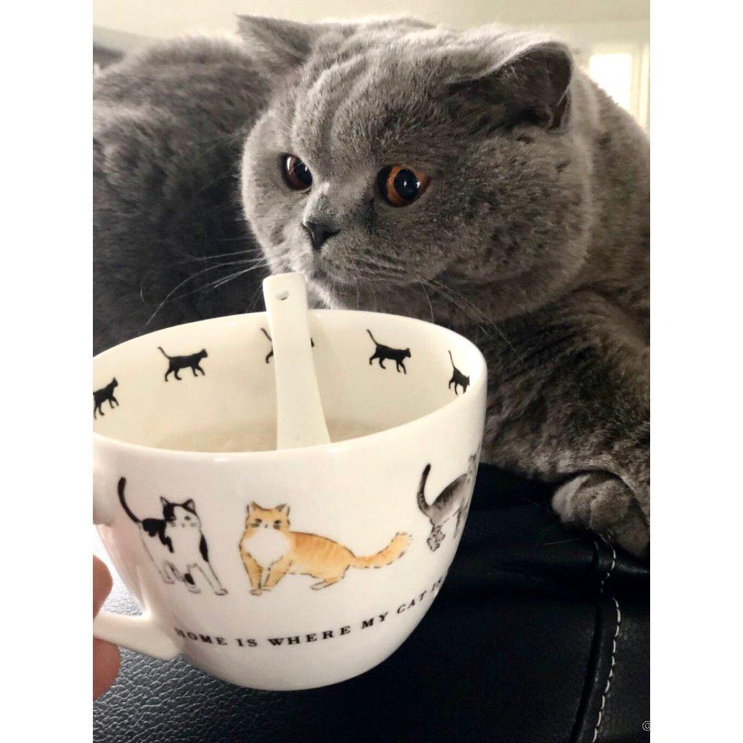 让猫奴心动的💓可爱猫咪杯
