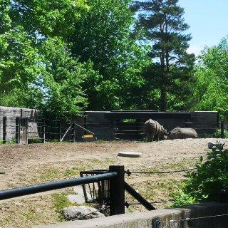 """多伦多动物园的""""自驾游""""🚗..."""
