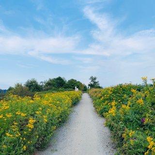 小徑兩旁都是野花