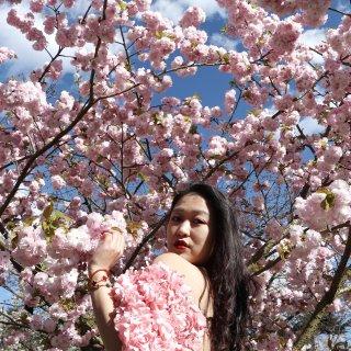 Asos floral top和英国樱花...