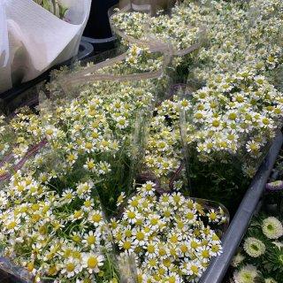 周末集市的花花...