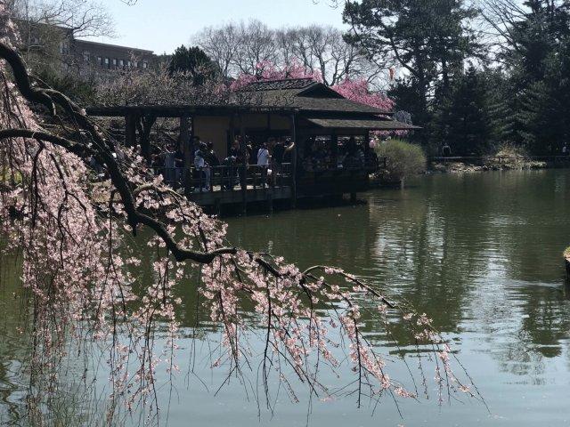 2018年 BBG(日本公园)初樱