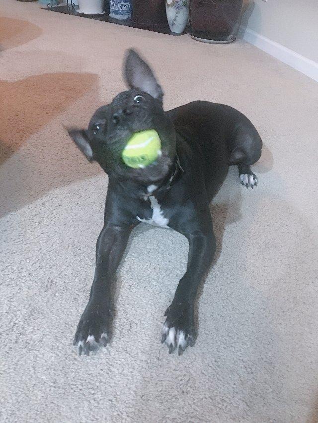 我家狗狗叫lucky,今年5⃣️岁...
