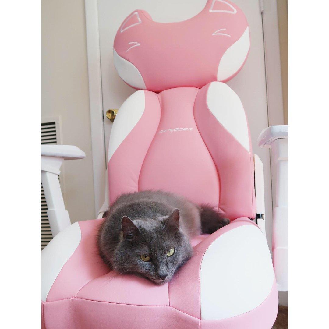 猫🐱比人会享受!!| 坐骑是它的啦~