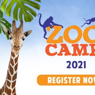 🐅🦍🐪🦙多伦多动物园开放夏令营啦~...