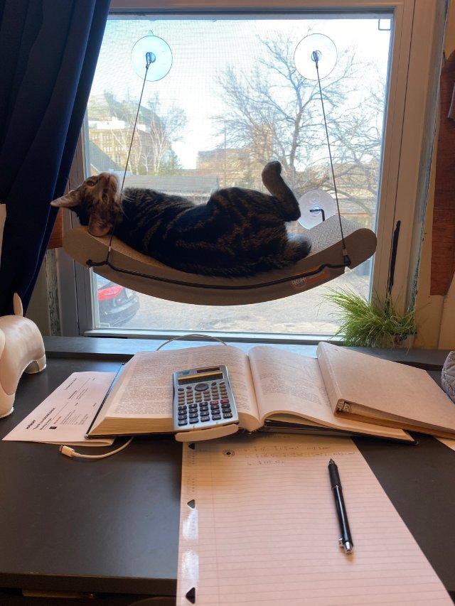 Chewy 猫吊床 拯救书桌