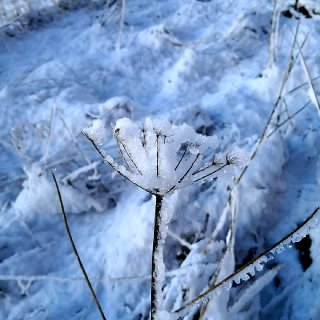 ❄❄苏格兰高地下雪啦☃️☃️...