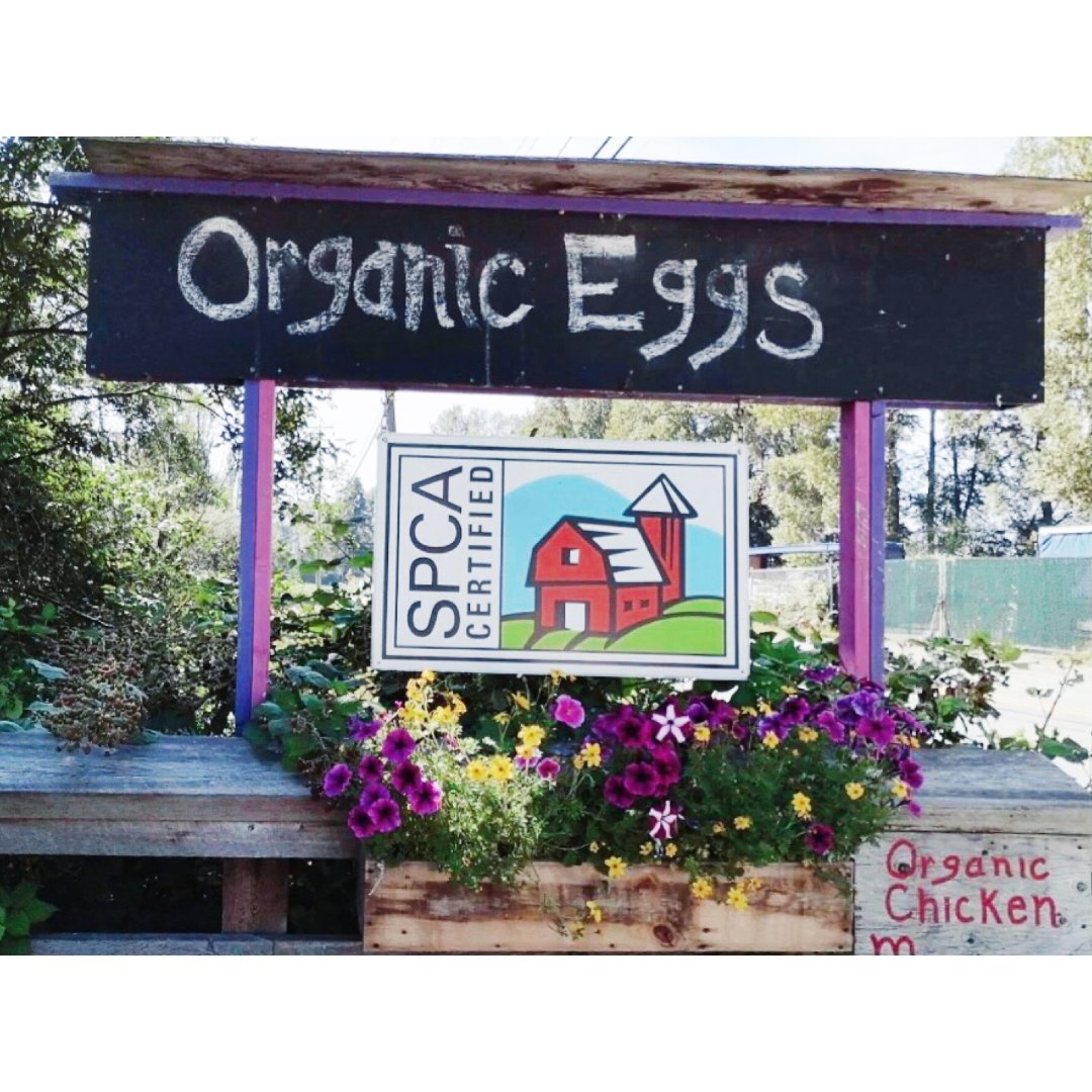 有机鸡蛋自助结算了解一下
