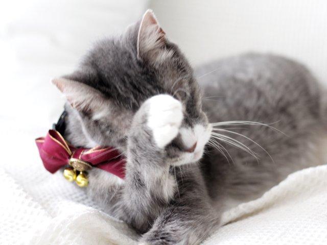 给自己猫咪来套写真😽