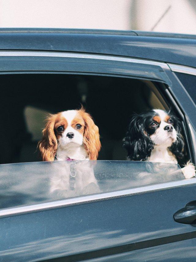 带着狗狗road trip