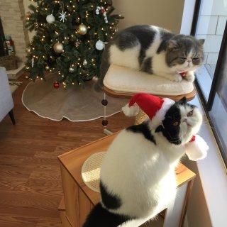 圣诞当然要跟主人们一起庆祝啦...