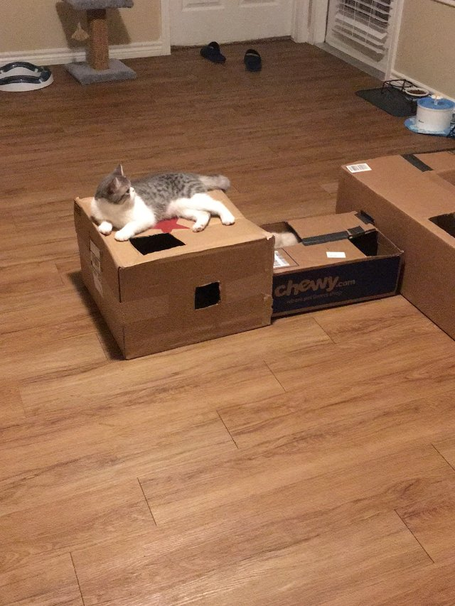 diy猫咪迷宫