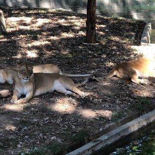 DC公园打卡之🐯National Zoo...