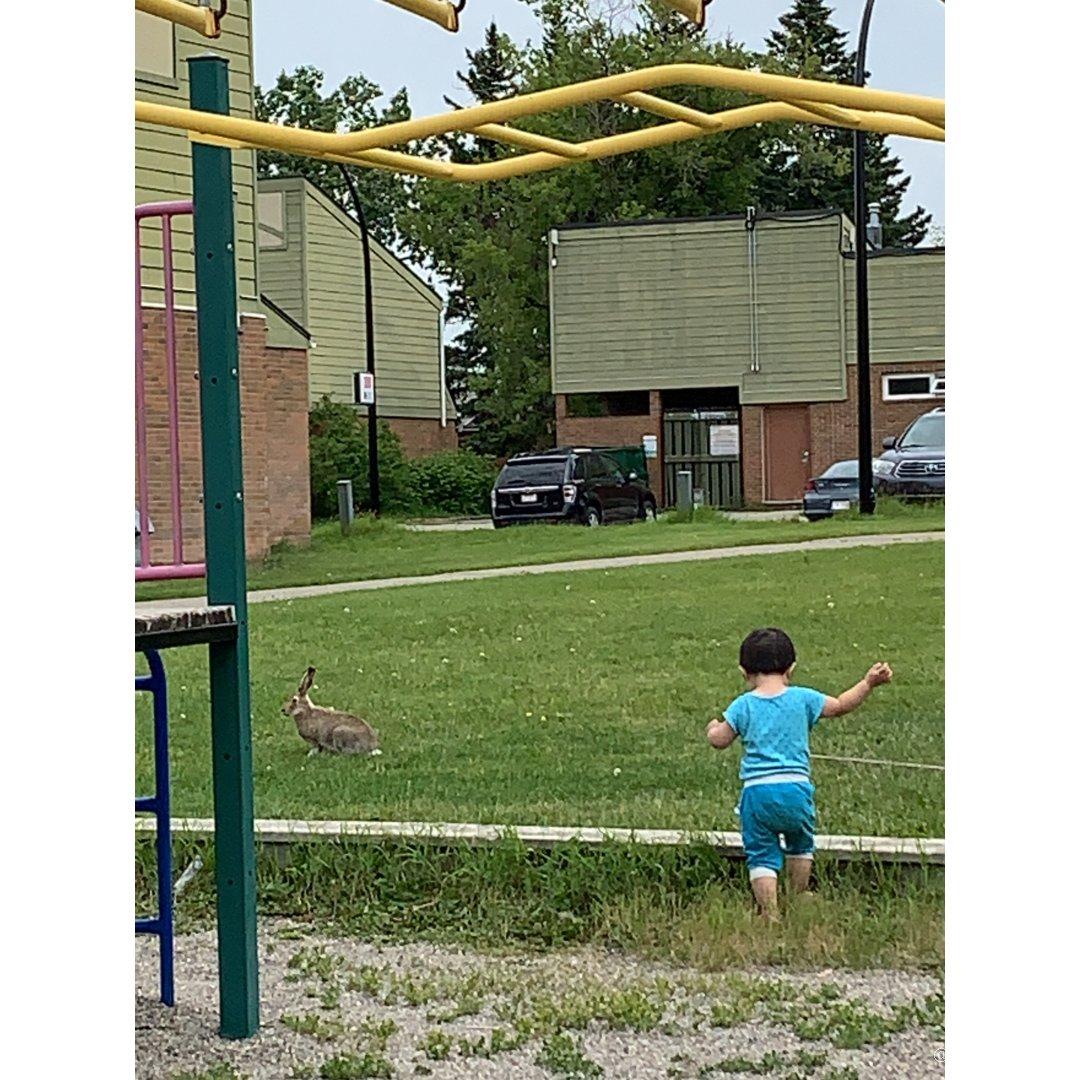 追着兔子跑的野孩子和逗着孩子玩的野兔子...