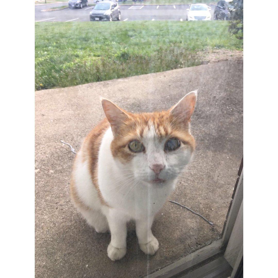 相册库存|家门口的流浪猫
