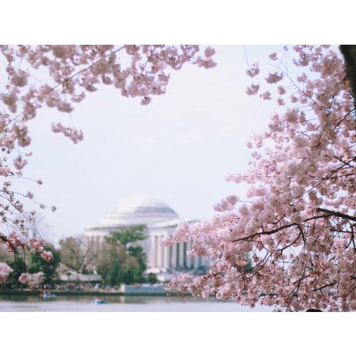 华盛顿🌸🌸节   直男最爱的粉嫩穿搭