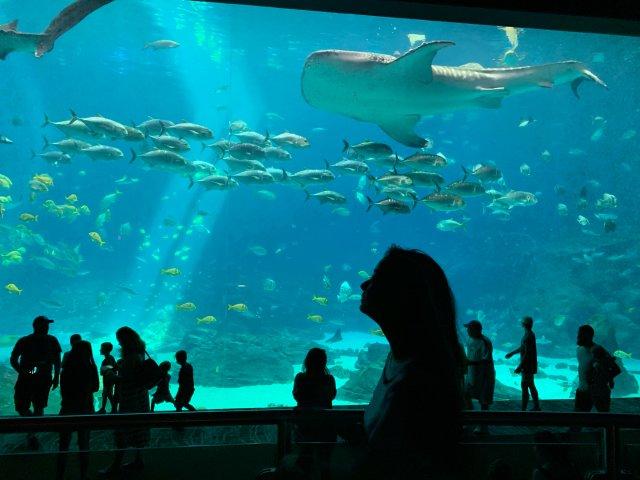 背景墙故事3⃣️   亚特兰大的水族馆🐟