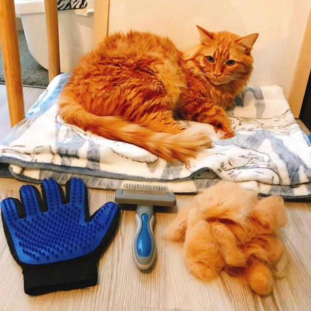 撸猫手套推荐!🧤真的太好用了😹