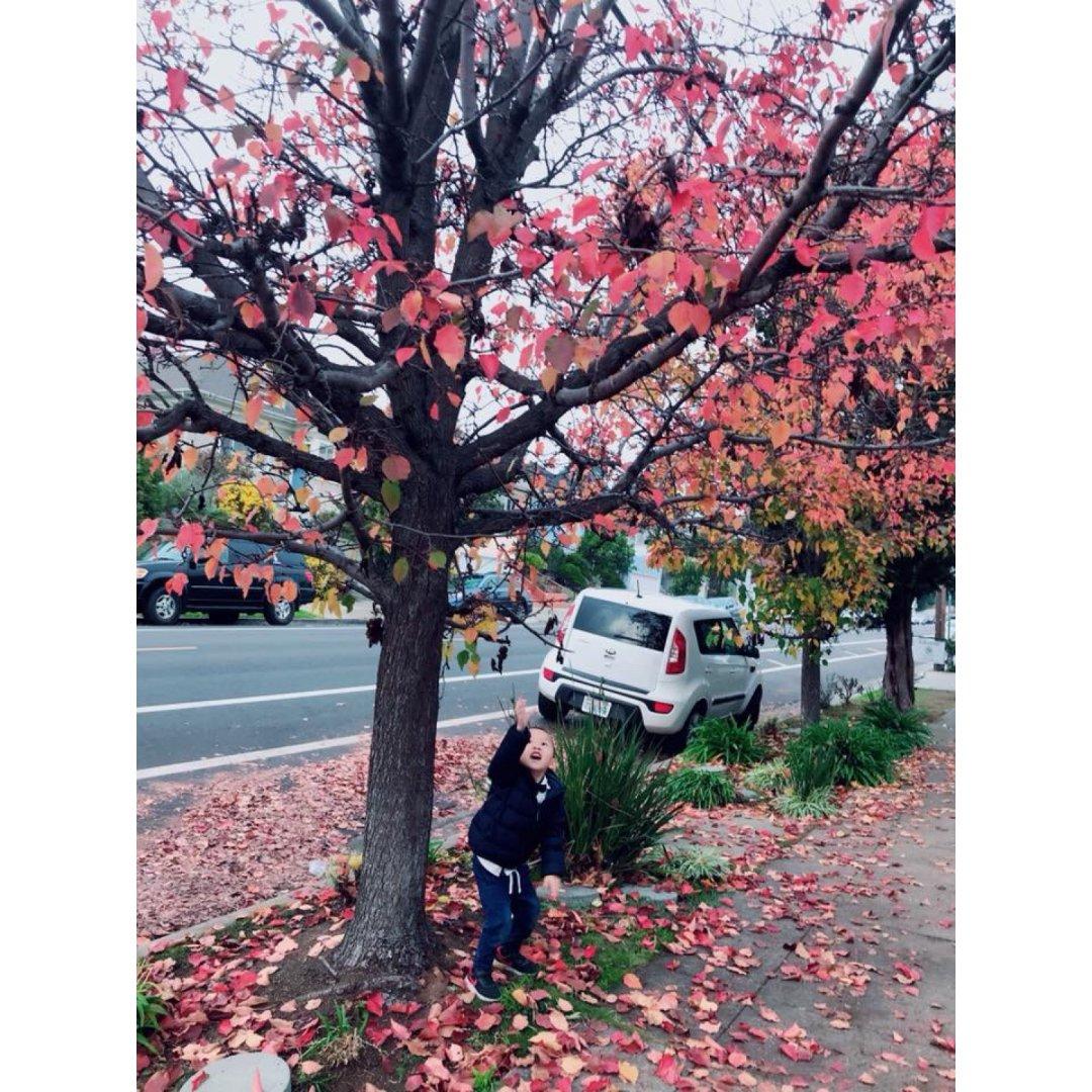 🍁賞楓的季節🍁 秋天來了❤️