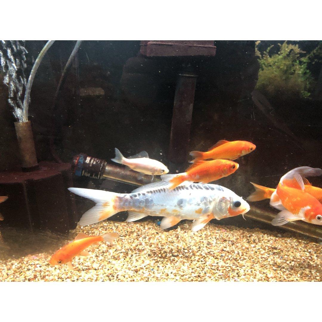 最近困得记忆跟鱼一样长...