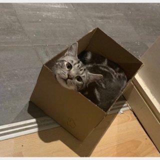 终于等到你,我的猫主子,还好我没放弃...