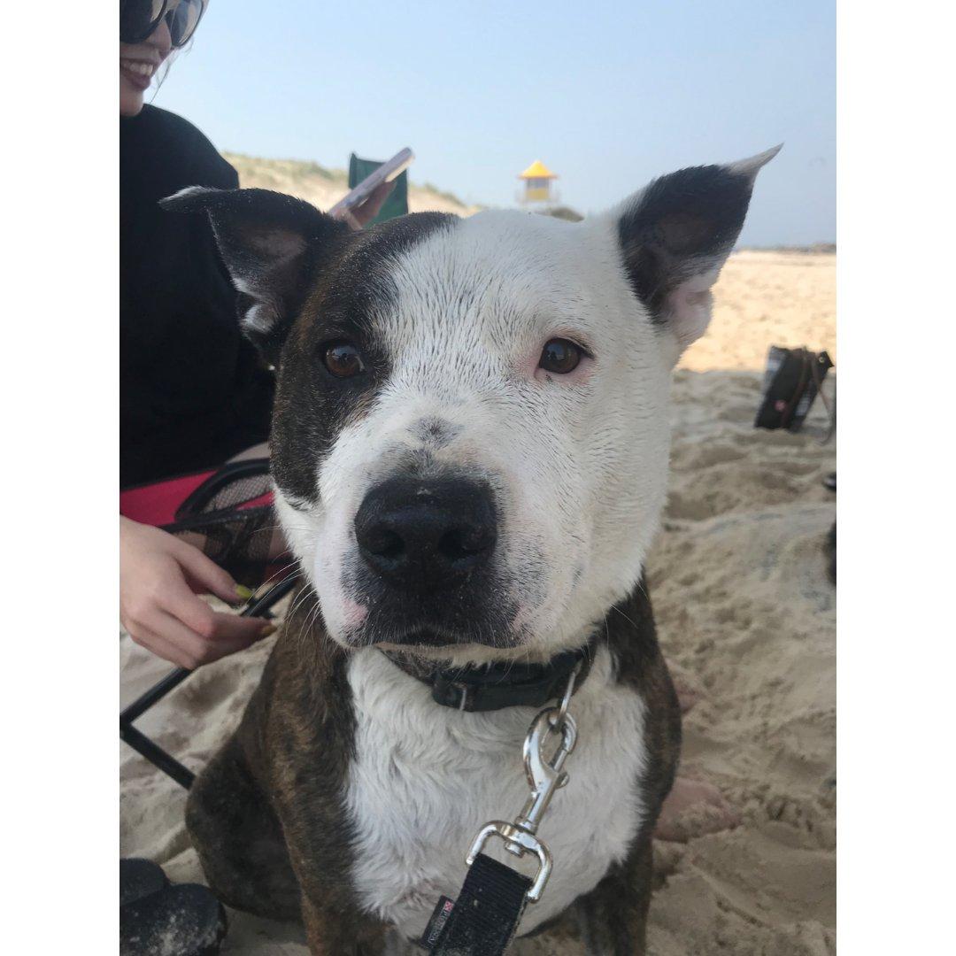 狗子和沙滩都在春天里