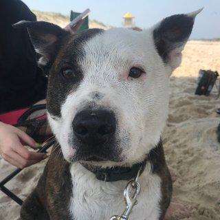 狗子和沙滩都在春天里...
