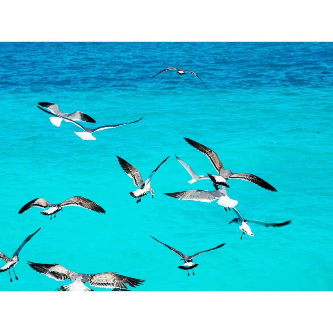 下半年愿望7|向往加勒比的碧海~坎...