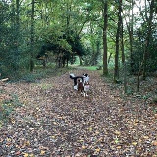 带狗子一起玩的秋天...