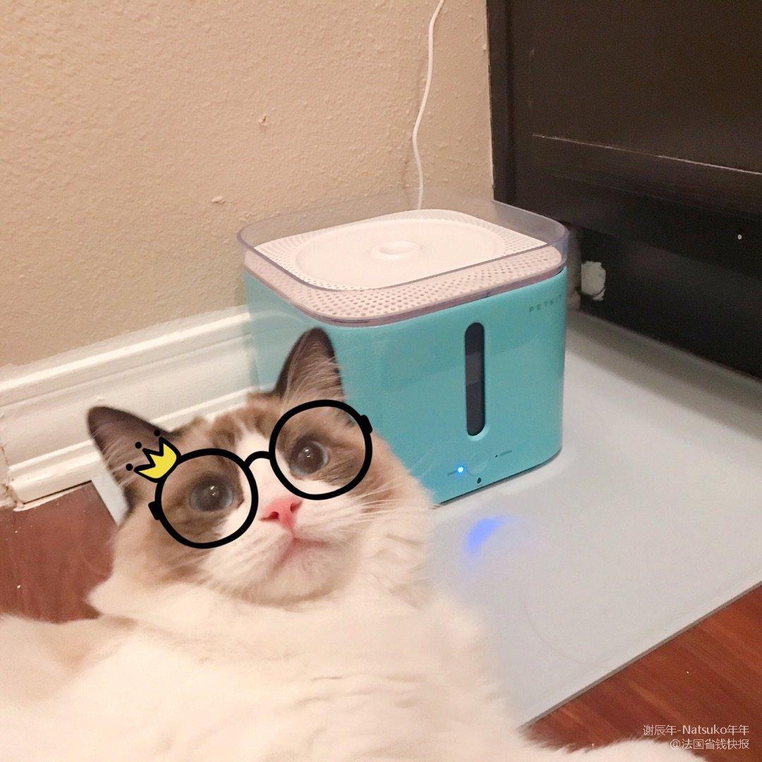 猫咪饮水机:小佩智能饮水机