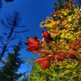 西雅图hiking🔆拥有最美秋日风景的M...