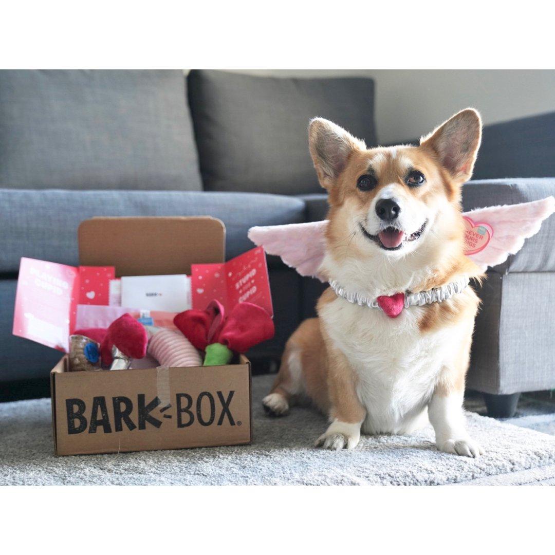 属于狗狗的订阅盒子|情人节Bark...