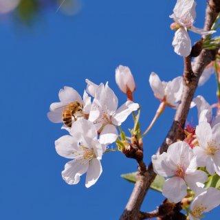 在夏天里回望春天🌸...