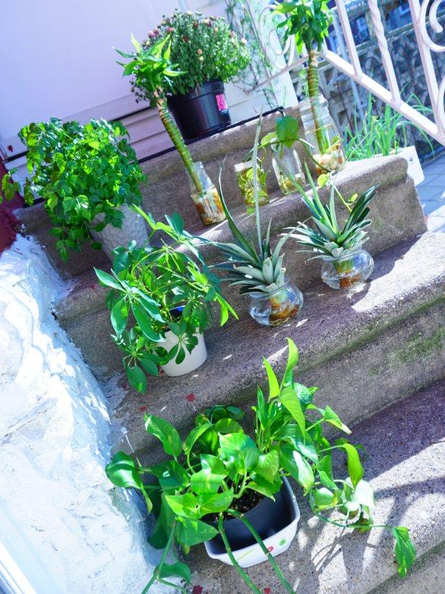 ❥家有绿植