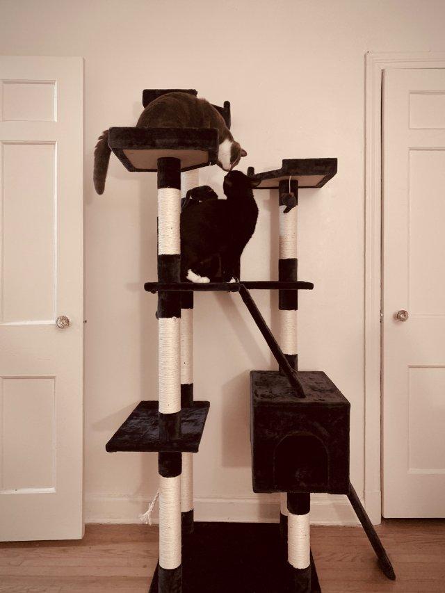 猫猫|斥巨资打造的猫爬架🐱🐱只为家...